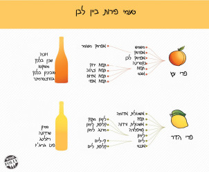 fruit-flavors-wine-white עברית